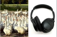 Why Noise Cancelling Headphones Don't Block Voices and What You Can Do About it